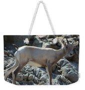 Bighorn Sheep Lamb Weekender Tote Bag