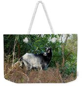 Kerry Mountain Goat Weekender Tote Bag