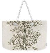 Birch Tree Weekender Tote Bag by Charles Harden