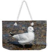 Black-billed Gull Weekender Tote Bag