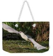 Black-crowned Night Heron In Flight Weekender Tote Bag