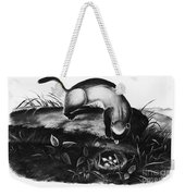 Black-footed Ferret Weekender Tote Bag