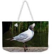 Black-headed Gull - Larus Ridibundus Weekender Tote Bag