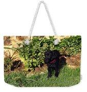 Black Labrador Retriever Puppy Weekender Tote Bag