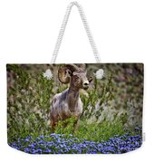 Blooms And Bighorn In Anza Borrego Desert State Park  Weekender Tote Bag by Sam Antonio Photography