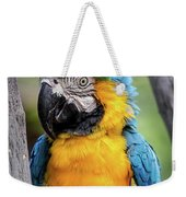 Blue And Yellow Macaw Portrait  Weekender Tote Bag