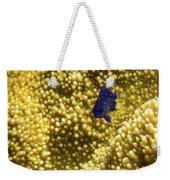 Blue Fish In Coral Weekender Tote Bag