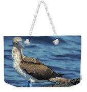 Blue-footed Booby  Puerto Egas James Bay Santiago James Island Galapagos Islands Weekender Tote Bag
