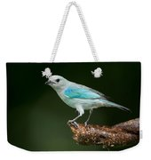 Blue-gray Tanager Thraupis Episcopus Weekender Tote Bag