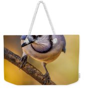 Blue Jay In Golden Light Weekender Tote Bag