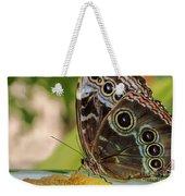 Blue Morpho Butterfly Morpho Peleides  Weekender Tote Bag