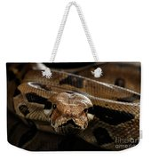 Boa Constrictor Imperator Color, On Isolated Black Background Weekender Tote Bag by Sergey Taran