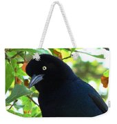 Boat Tailed Grackle Close Up Weekender Tote Bag