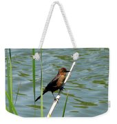 Boat Tailed Grackle Female Weekender Tote Bag