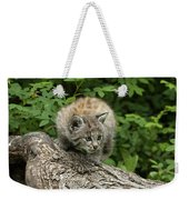 Bobcat Kitten Exploration Weekender Tote Bag by Sandra Bronstein