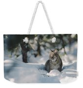 Bobcat Lynx Rufus Adult Resting In Snow Weekender Tote Bag by Michael Quinton