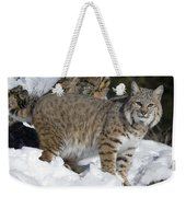 Bobcat Lynx Rufus In The Snow Weekender Tote Bag by Matthias Breiter