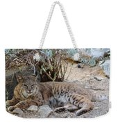 Bobcat Resting Weekender Tote Bag