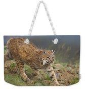 Bobcat Stalking North America Weekender Tote Bag