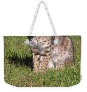 Bobcat - Wildcat Beach Weekender Tote Bag