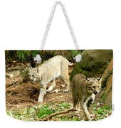 Bobcats Begin To Hunt Weekender Tote Bag