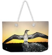 Booby At Sunset Weekender Tote Bag
