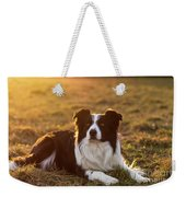 Border Collie At Sunset With Warm Colors Weekender Tote Bag