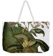 Botany: Tobacco Plant Weekender Tote Bag