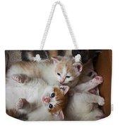 Box Full Of Kittens Weekender Tote Bag by Garry Gay
