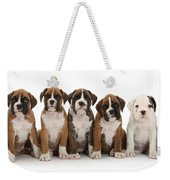 Boxer Puppies Weekender Tote Bag by Mark Taylor