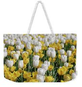 Breathtaking Field Of Blooming Yellow And White Tulips Weekender Tote Bag
