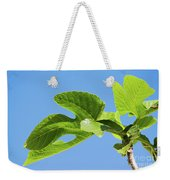Bright Green Fig Leaf Against The Sky Weekender Tote Bag