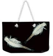 Brine Shrimp, Artemia Salina, Lm Weekender Tote Bag