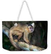 Brown Capuchin Monkey Cebus Apella Weekender Tote Bag