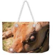 Brown Cow 2 Weekender Tote Bag