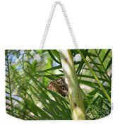 Brown Morpho Butterfly Resting On A Sunny Tree  Weekender Tote Bag