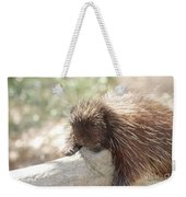 Brown Porcupine On A Fallen Log Weekender Tote Bag