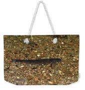 Brown Trout Weekender Tote Bag
