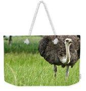 Browsing Ostrich Weekender Tote Bag