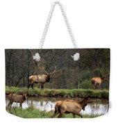 Buck In Wilderness Weekender Tote Bag