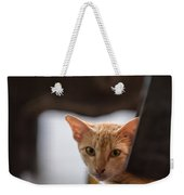 Buddhist Temple Cat Weekender Tote Bag