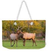 Bull And Cow Elk - Rutting Season Weekender Tote Bag