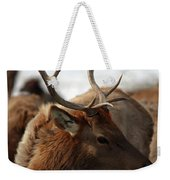 Bull Elk At Hardware Ranch 2 Weekender Tote Bag