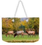 Bull Elk  Bugling With Cow Elks - Rutting Season Weekender Tote Bag