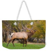 Bull Elk In Rutting Season Weekender Tote Bag