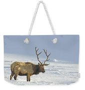 Bull Elk In Snow Weekender Tote Bag