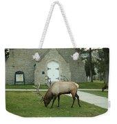 Bull Elk On The Church Lawn Weekender Tote Bag