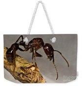 Bullet Ant Weekender Tote Bag