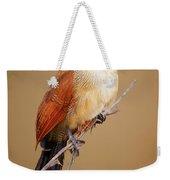 Burchell's Coucal - Rainbird Weekender Tote Bag