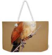 Burchell's Coucal - Rainbird Weekender Tote Bag